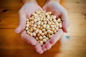 美味しい福岡のふくゆたか大豆