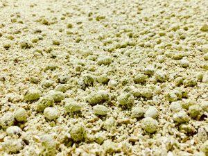 黄色の麹菌が大豆の周囲に増えてきたのが見て取れます 麹が完成したら、塩水に入れます。